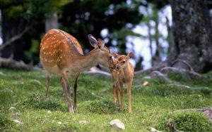 Семейный отдых на природе в Беларуси