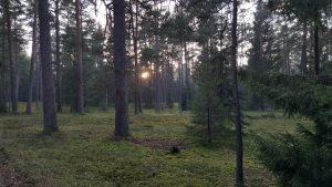 Агроусадьба в центре Беловежской пущи