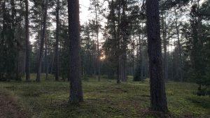 Усадьба со столовой в Беловежской пуще