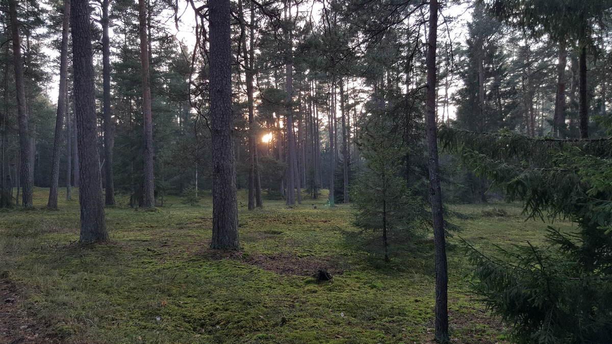 Отдых выходного дня в Беларуси