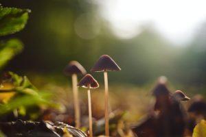 грибы в пуще